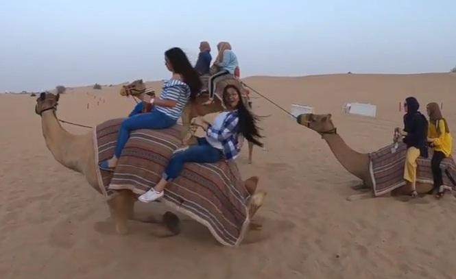 Camel Ride Dubai