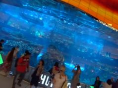 Under water Zoo Dubai