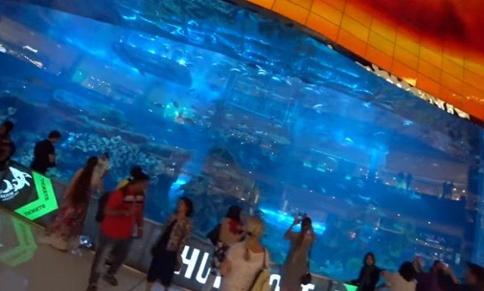 Under water Zoo Dubai