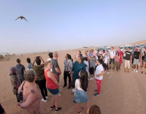 Desert Falcon Show
