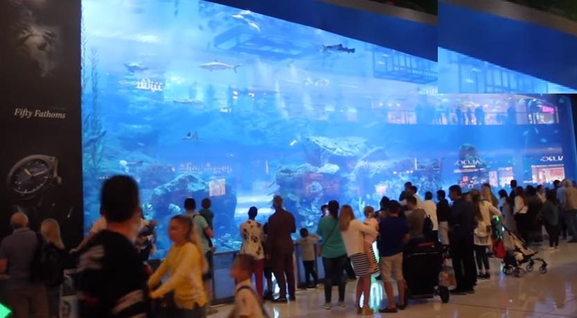 fish-aquarium-dubai